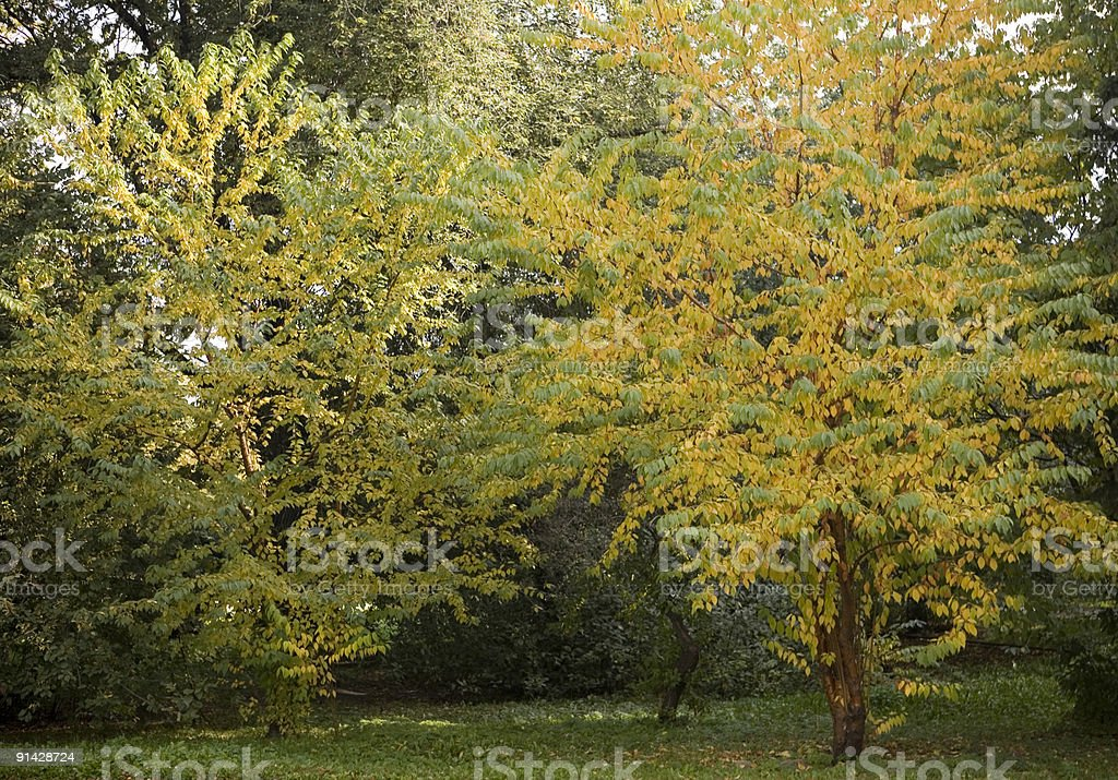 Collection of autumn leaves in tree nurseries 5 stock photo