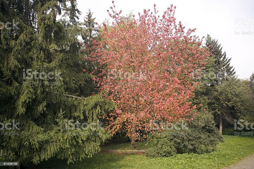 Collection of autumn leaves in tree nurseries 7 stock photo