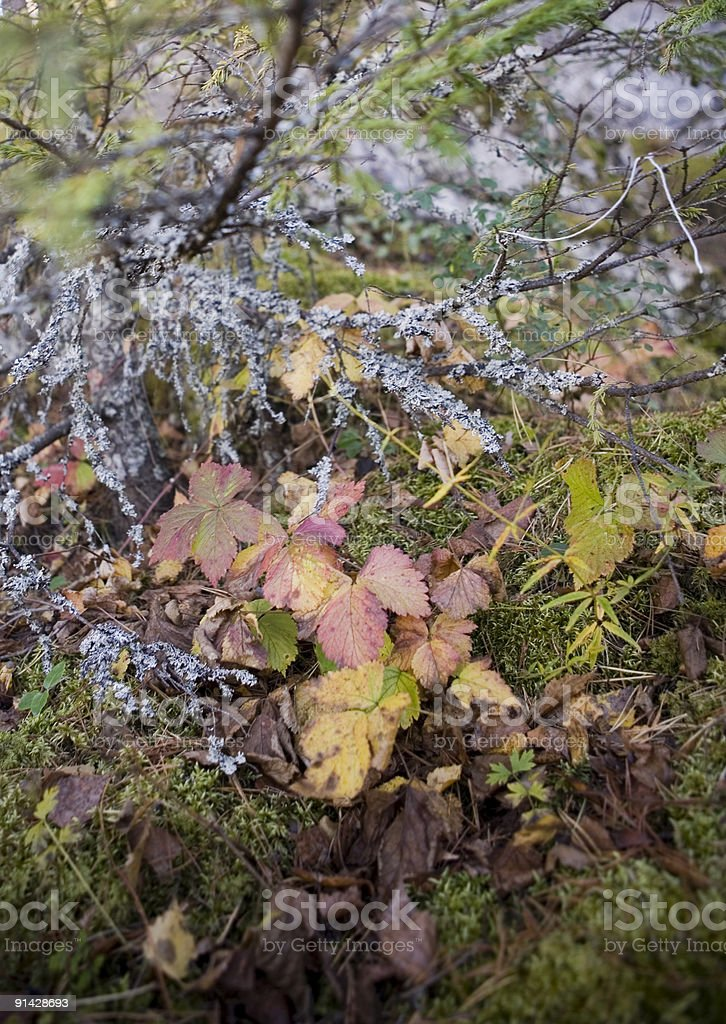 Collection of autumn leaves in tree nurseries stock photo