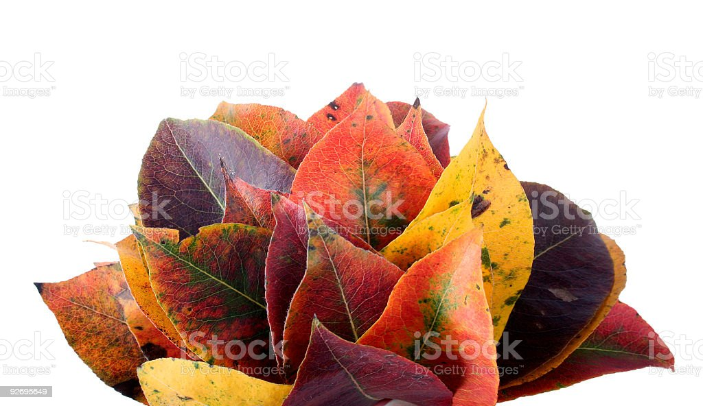 Collection of autumnal leaf stock photo