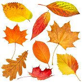 istock Collection of beautiful colorful autumn leaves isolated on white background 1213017945