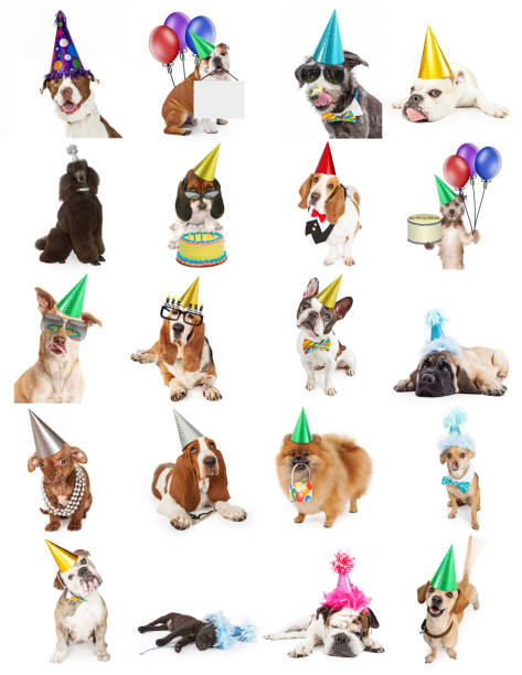 coleção de fotos de cachorro festa de aniversário - cachorro desenho - fotografias e filmes do acervo