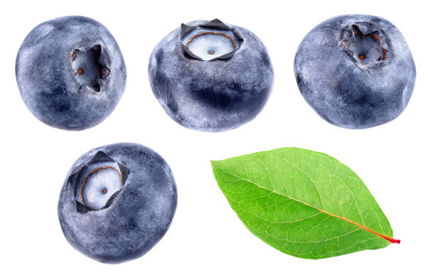 collection of blueberries isolated on white - blueberry stock pictures, royalty-free photos & images
