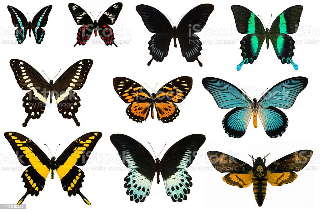 Collection of butterflys stock photo