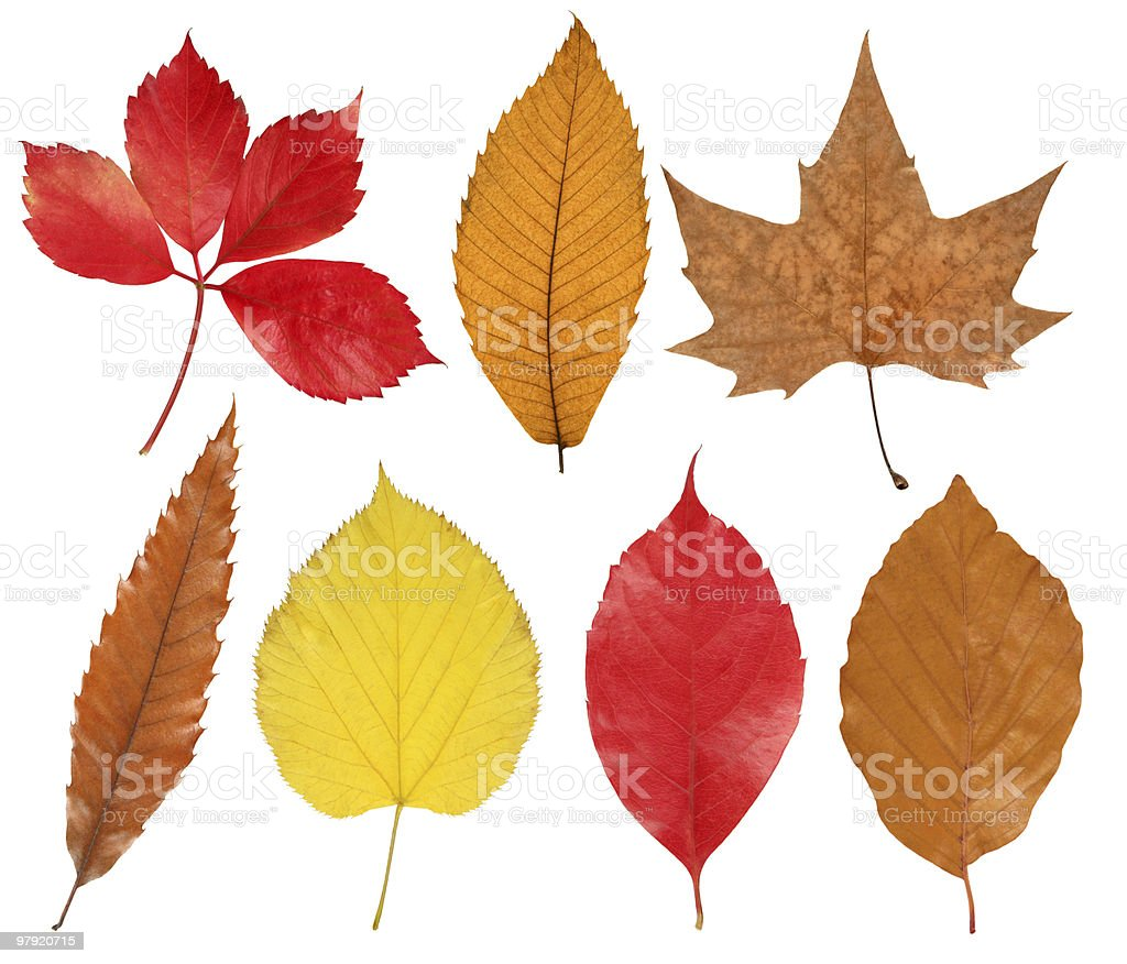 Collection of colorful autumn leaves royalty-free stock photo