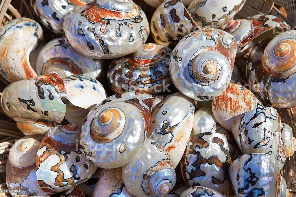 Collection of colourful coastal sea shells - Royalty-free Arka planlar Stok görsel