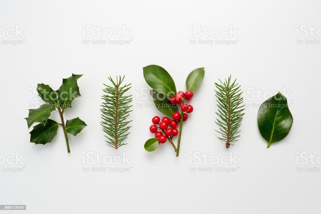 Colección de Plantas decorativas de Navidad con hojas de color verde y bayas de acebo. - foto de stock