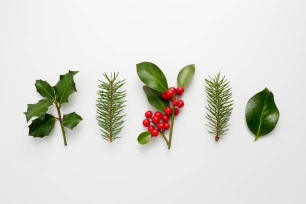 collection of decorative christmas plants with green leaves and holly berries. - branch plant part stock pictures, royalty-free photos & images