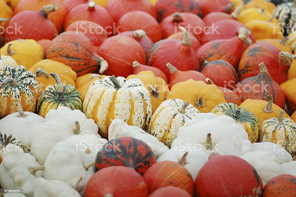 collection of different pumpkins royalty-free stock photo