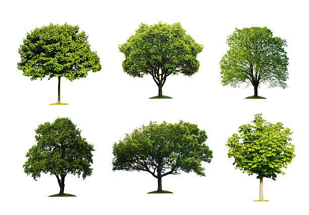 Bäume-Kollektion – Foto