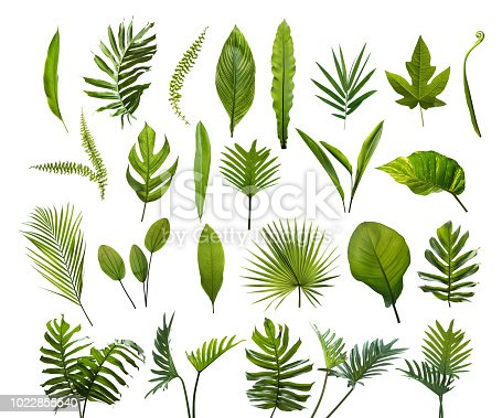Collection of different tropical leaves. Elements set leaf on isolated white background
