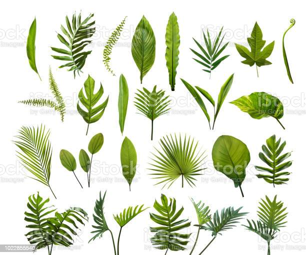 Photo of Collection of different tropical leaves. Elements set leaf on isolated white background