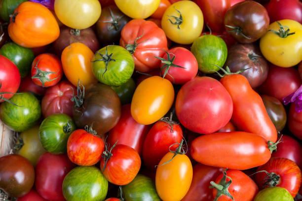 Eine Sammlung von verschiedenen Sorten Tomaten auf einem Markt in Nizza, Frankreich – Foto