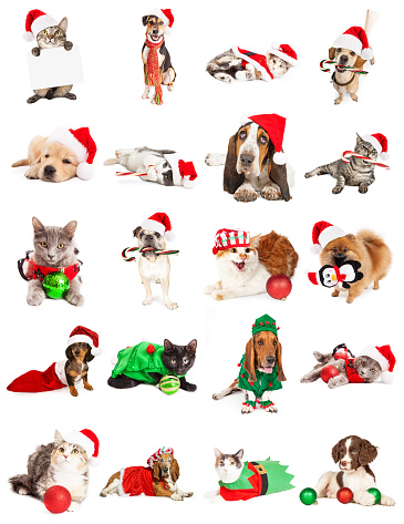 Set of twenty Christmas themed dog and cat photos. Sized to print on letter paper or for use on websites or social media.