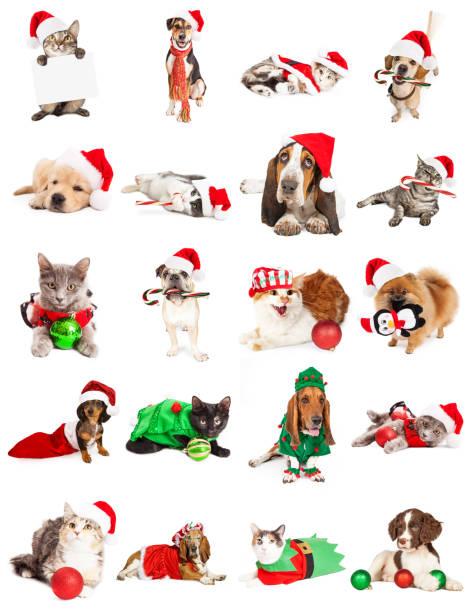 sammlung von hund und katze weihnachtsbilder - katze weihnachten stock-fotos und bilder