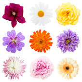 variety of blossoms arranged in a square on white background