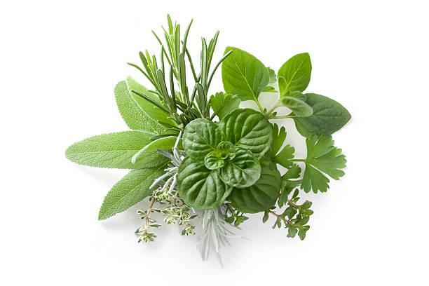 zbiór świeże zioła - liść mięty przyprawa zdjęcia i obrazy z banku zdjęć