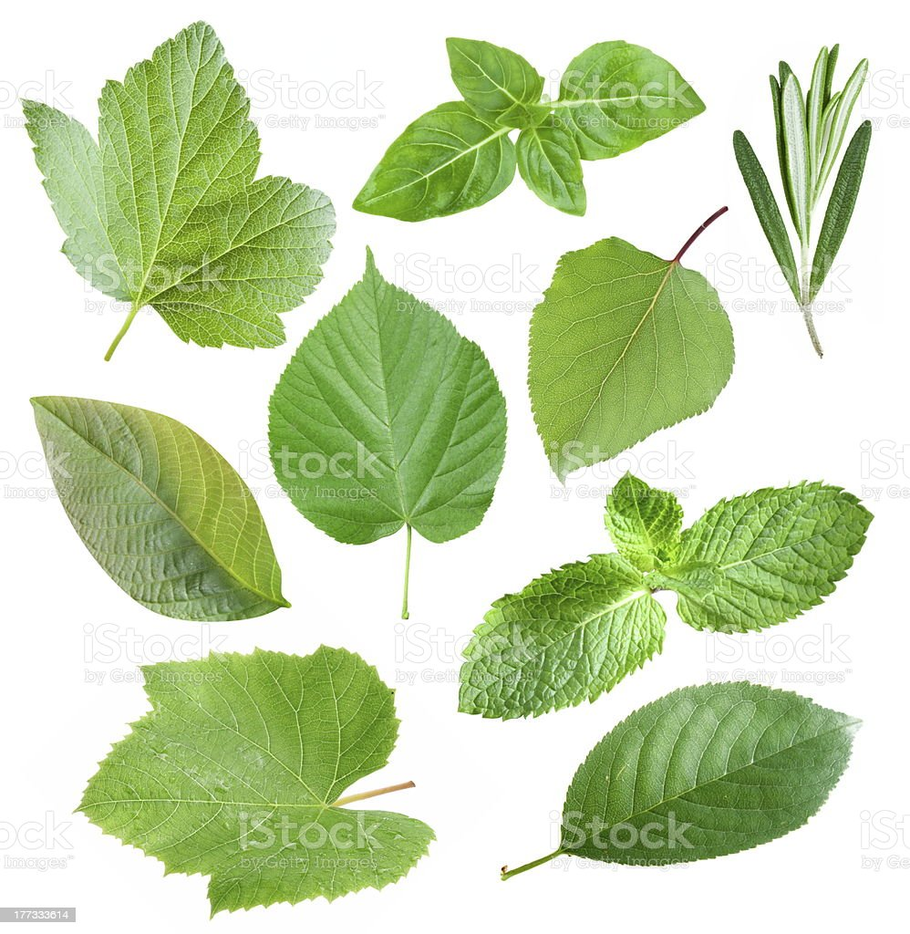 Collection of garden leaves royalty-free stock photo