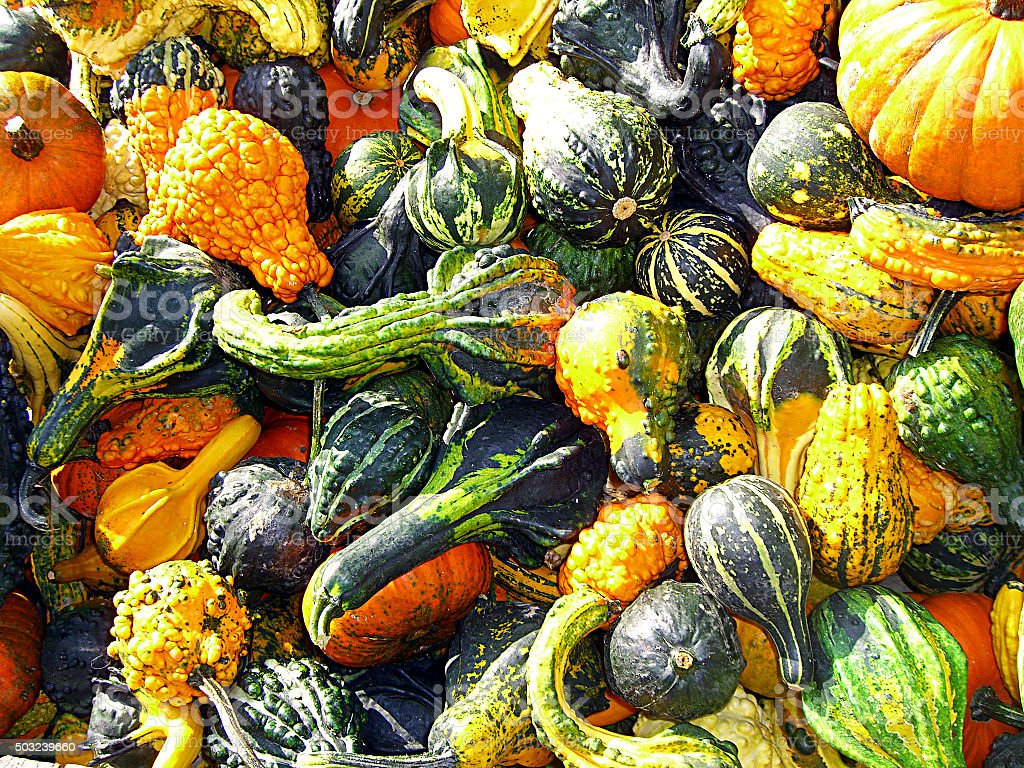 Collection of Gourds stock photo