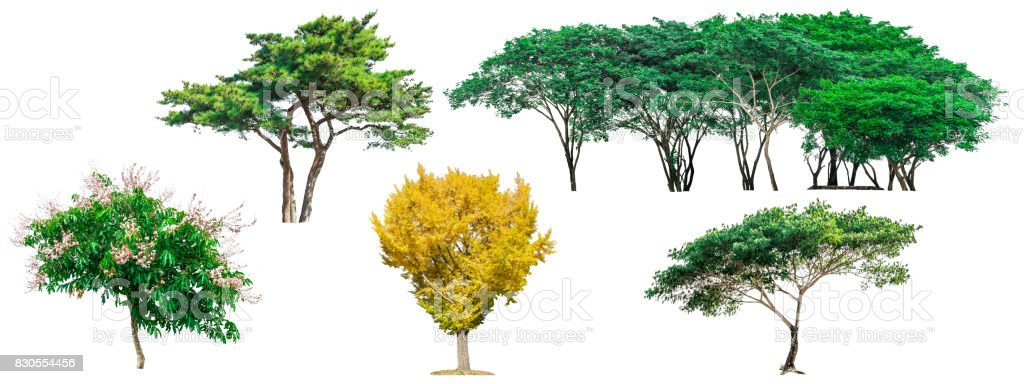 Collection of green trees isolated on white background for use in architectural design or decoration work. stock photo