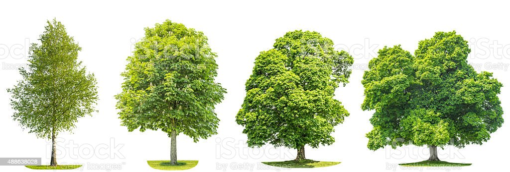 Collection of green trees maple, birch, chestnut. Nature objects stock photo
