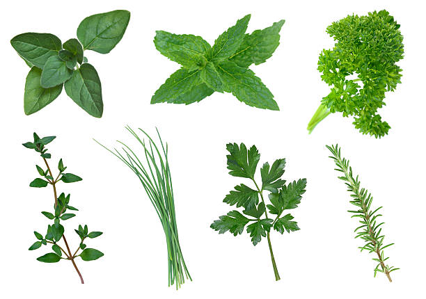 Collection of herbs stock photo