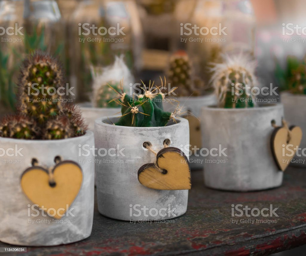 Decoration Avec Plantes Grasses photo libre de droit de collection de plantes dintérieur