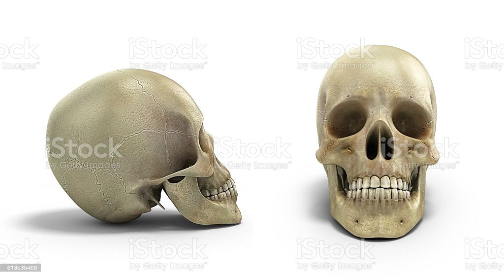 collection of Human skull on isolated white background 3d render stock photo