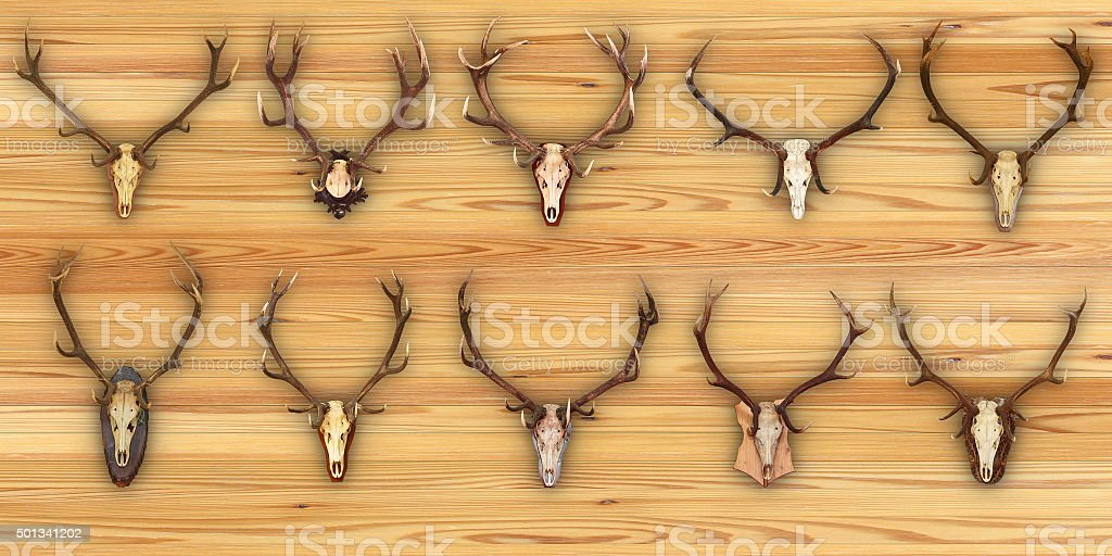 collection of hunting trophies on wooden background stock photo