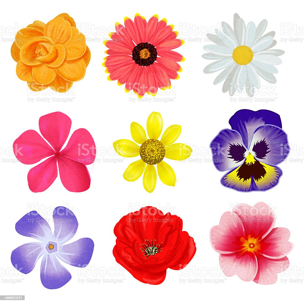 Collection of illustrated spring flowers stock photo more pictures collection of illustrated spring flowers royalty free stock photo mightylinksfo Choice Image