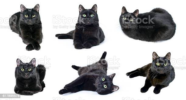 Collection of images of black cat picture id617895578?b=1&k=6&m=617895578&s=612x612&h=s5ow93fy53xug qhsnpwj7rh3bdskrbh bf 9ej38km=