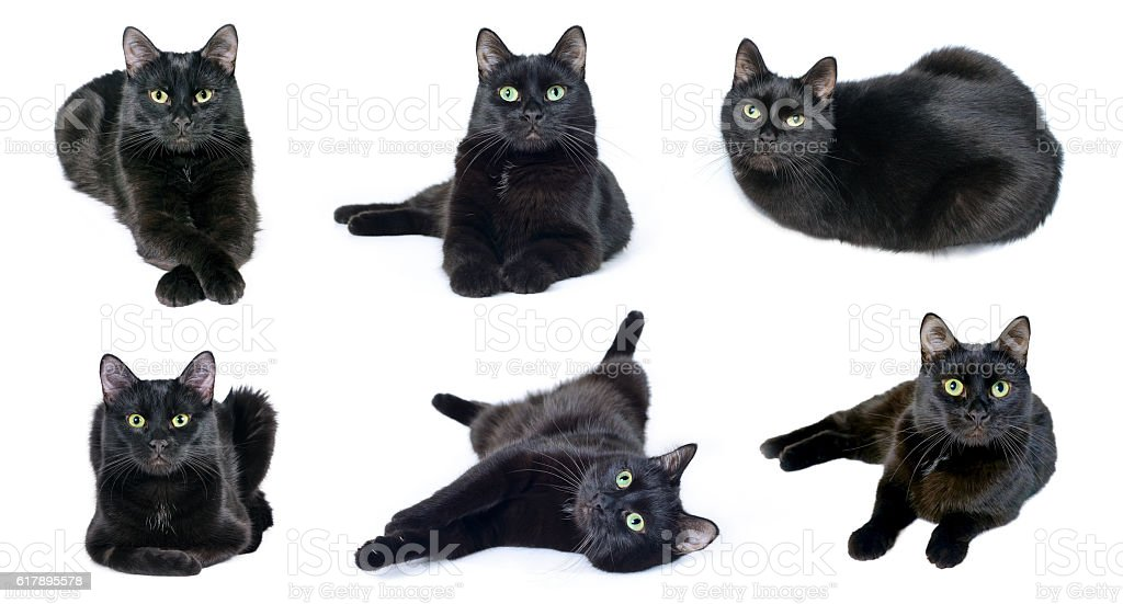 Collection of images of black cat stock photo