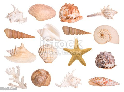 Large selection of isolated seashells and a starfish. Montage.