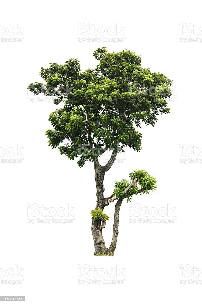 collection of isolated summer tree royalty-free stock photo