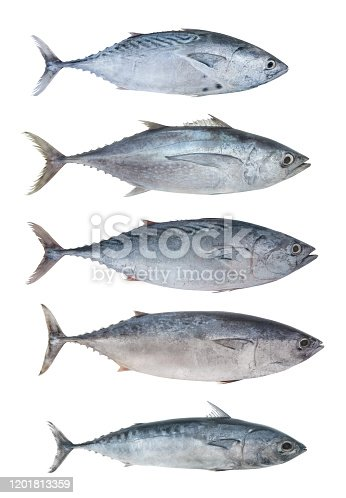 156872766 istock photo Collection of isolated tuna fish 1201813359