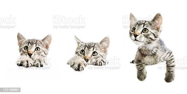 Collection of kittens above white banner picture id122186891?b=1&k=6&m=122186891&s=612x612&h=gfaouqlv2dms0zog2zgyd0iturgq7q3g17jhw cr77e=