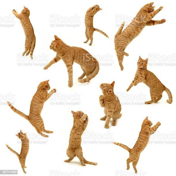 Collection of kittens in action picture id92241550?b=1&k=6&m=92241550&s=612x612&h=zftq0f3ut8hwyule8hkxup6fdznjjjs9 vevdb0e3bk=