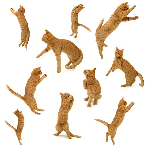 collection of kittens in action stock photo