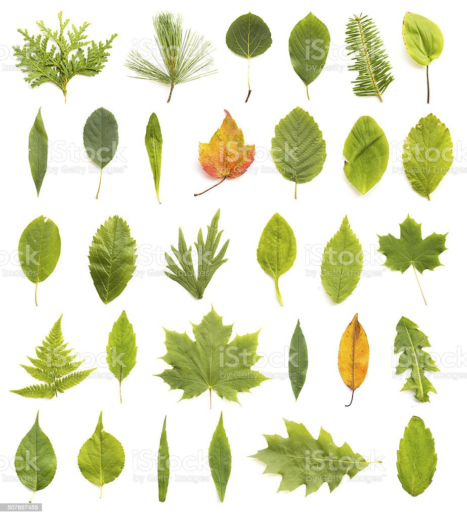 Collection of Leaves stock photo