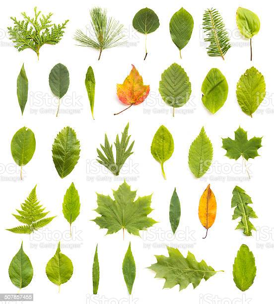 Collection Of Leaves Stock Photo - Download Image Now