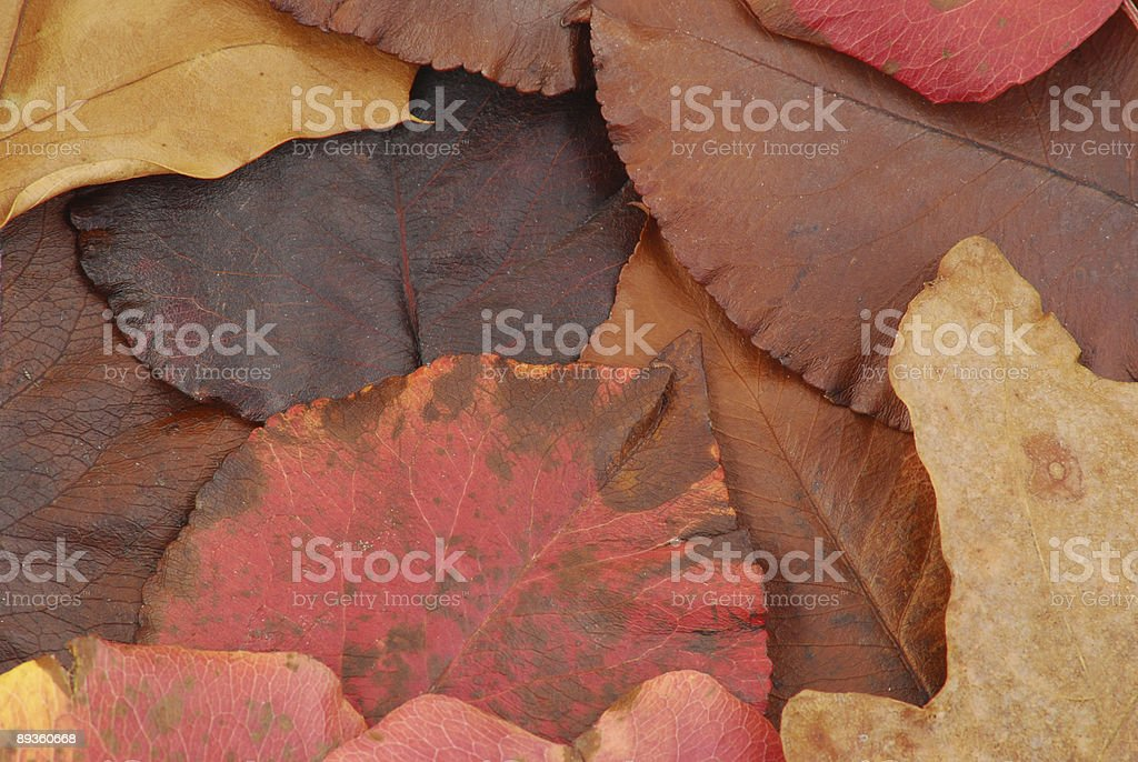 Collection of leaves royalty free stockfoto