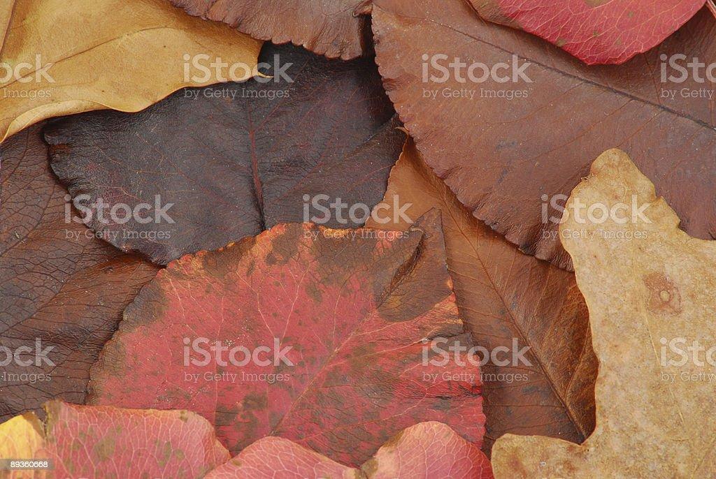 Raccolta di foglie foto stock royalty-free