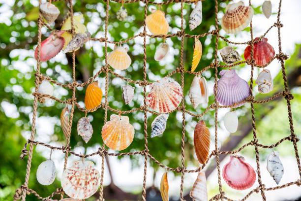 Sammlung von Meeresmuscheln, die am Netz hängen – Foto