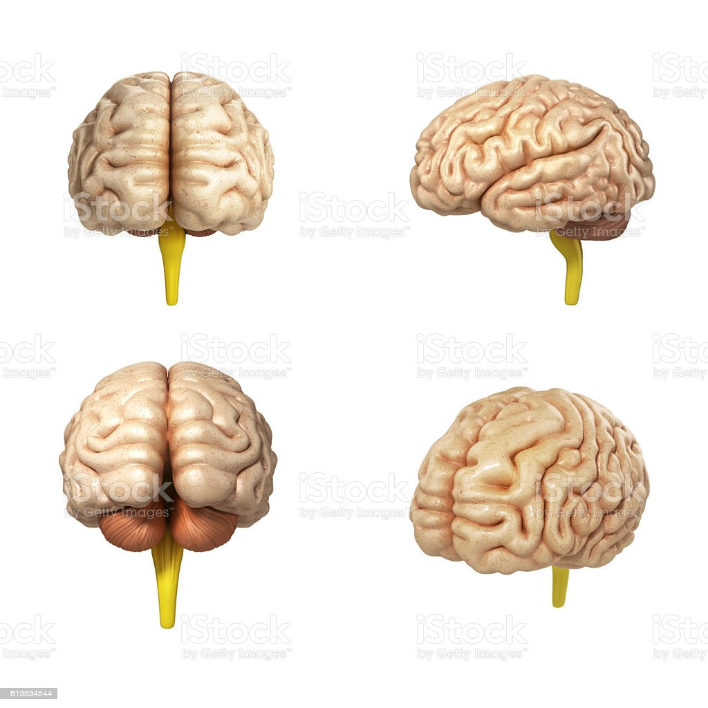 collection of medically accurate illustration of the brain stock photo