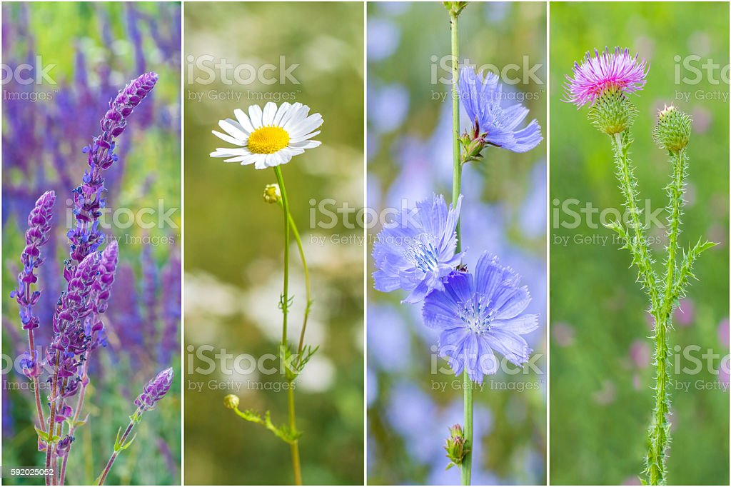collection of medicinal wild flowers in a frame стоковое фото