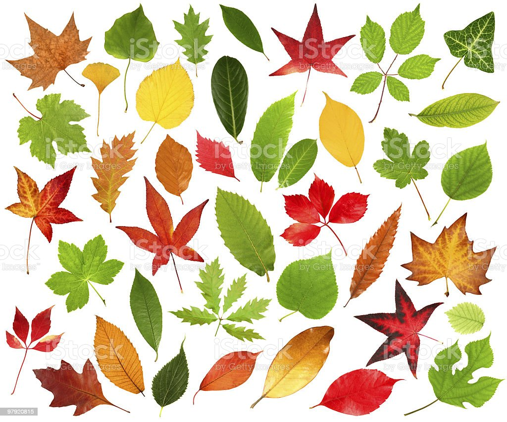 Collection of multicolored leaves on white background royalty-free stock photo