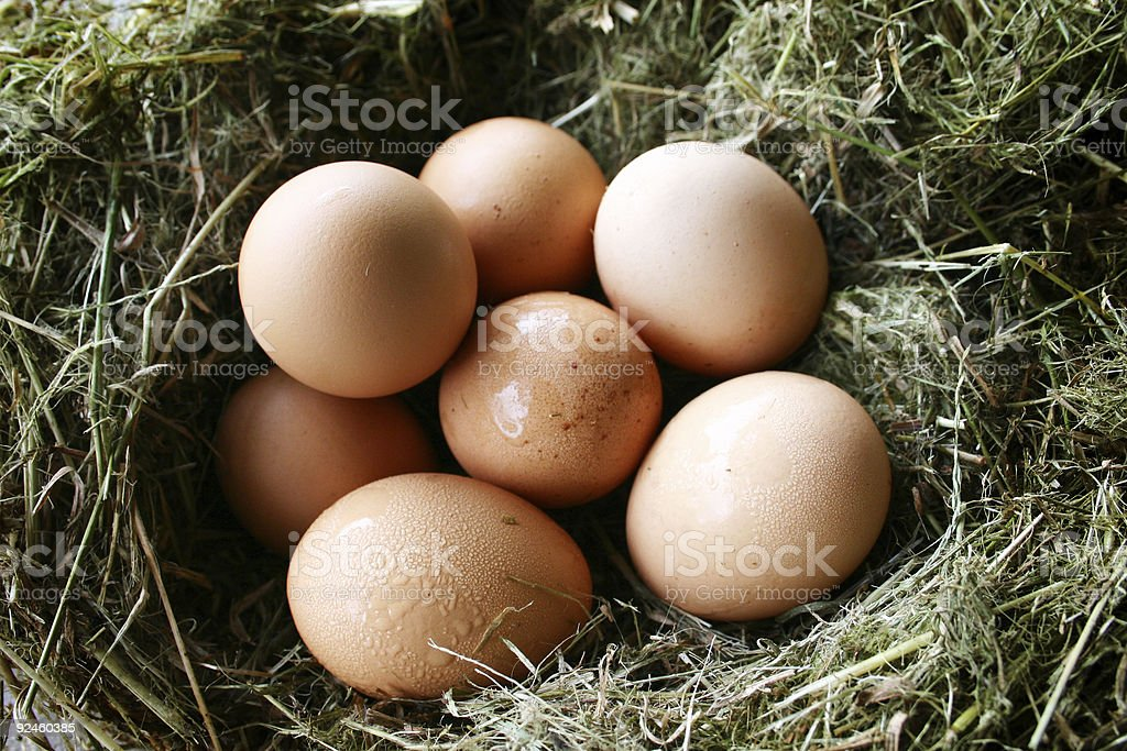 Collection of Nest Eggs stock photo