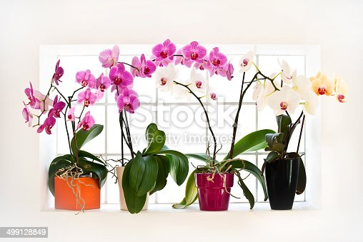 Collection of orchids phalaenopsis