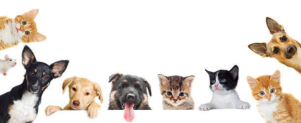 Collection of pet stock photo