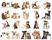 istock Collection of Photos of Dogs and Cats Together 1006322236
